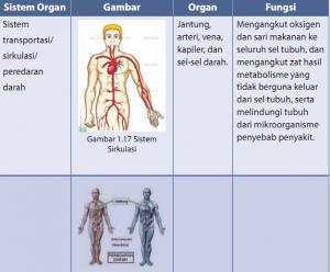 Jaringan dan Organ Pada Hewan dan Tumbuhan