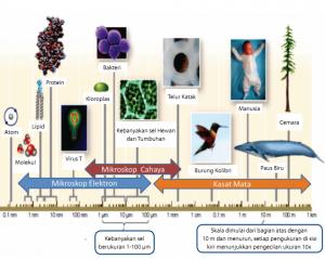 Sel sebagai Unit Struktural dan Fungsional Kehidupan